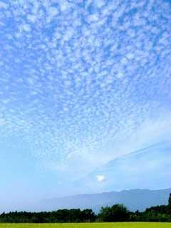 いわし雲.jpg